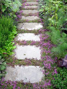 Unique Garden, Easy Garden, Ground Cover Plants, Garden Cottage, Garden Shop, Garden Stones, Stone Garden Paths, Stone Paths, Cool Plants