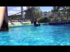 Dock Dogs | Puppy Learns to Jump Off Dock   #dogtraining #puppy   http://www.sitmeanssit.com/daily-videos/