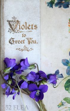 52 FLEA: Violets To Greet You {as I pray for my Auntie to be able to fight off infection that fills her body}