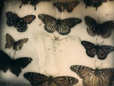 Nature Photography - Surreal Butterflies Print Dreamy Magical Fantasy Butterfly Nursery Decor Romantic Art Feminine Home Girls Room Butterfly Nursery, Looks Dark, Photocollage, Forest Fairy, Back To Nature, Pics Art, Pretty Pictures, Aesthetic Pictures, Tattoos