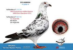 4289354-13 • Van der Maelen - Penne