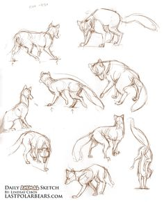 Foxes - from the sketchbook by LCibos.deviantart.com on @DeviantArt
