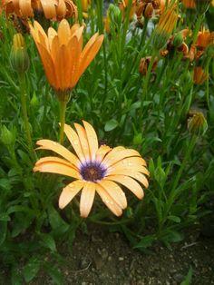 庭の花。たくさん撮ったその1\(^-^)/