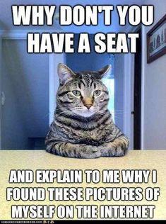 Cat dump - Imgur