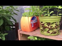 Growing organic vegetables in containers. In this video, I am giving you updates on growing organic vegetables in containers in my greenhouse garden, some of. Organic Horticulture, Organic Gardening, Gardening Tips, House Plants Decor, Plant Decor, Epsom Salt For Plants, Homemade Plant Food, Greenhouse Gardening, Greenhouse Ideas