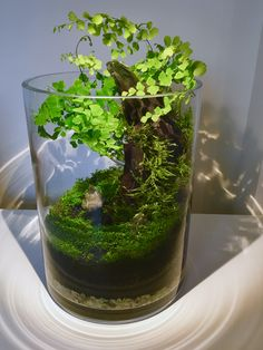 Need Advice On Indoor Gardening? Read On Have you ever wanted to have an indoor garden, but just do not know how to start? It is not rocket science. In fact, it has been done for hundreds of years, before the advent of chemicals. Dish Garden, Bottle Garden, Glass Garden, Garden Seeds, Garden Plants, House Plants, Terrariums, Moss Terrarium, Water Terrarium