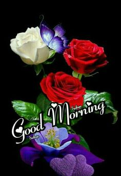 Good Morning Wishes Gif, Good Morning Quotes, Sunday Greetings, Morning Greeting, Beautiful Flowers, Rose, Plants, Motivational Quotes, Night