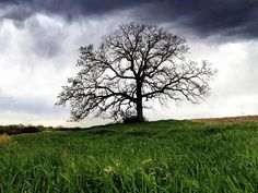 How a Tree Helped Heal Me by Mark Hirsch, cbsnews:  2012 photographer Mark Hirsch, was still recovering from a near-fatal accident when he took a picture of an ancient Bur Oak tree in a nearby cornfield with an iPhone and subsequently began a year-long project to capture a picture a day of the oak, finding solace, and heretofore hidden beauty, in his towering, monumental subject... #Documentary #Tree #Photography
