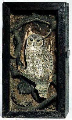 joseph cornell owl box - Google Search