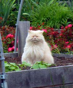 Cute fluffy cat meditating in the garden.