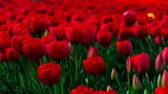 Beautiful Flowers Wallpapers For Desktop Background 1680 ...