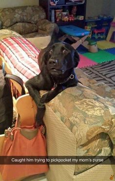 Caught him trying to pickpocket my mom's purse.