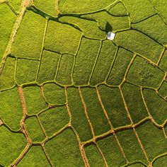Top Shot: Rice Patterns | Photograph by Duey Moore An aerial shot of rice fields in northern Thailand. Every day, Your Shot editors choose the Daily Dozen from thousands of recent uploads. Top Shot is the photo that earns the most votes. Each day's Top Shot winner will receive a yearlong subscription to National Geographic. #thailand #natgeo #yourshot #topshot #dailydozen #aerialphotography #aerial #rice