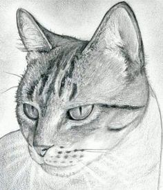 how to draw a cat head, draw a realistic cat step 10