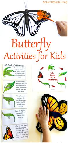 The Best Butterfly Life Cycle Activities for Kids, teach your kids about the butterfly life cycle in a fun, educational way. Plus add in hands-on activities, butterfly life cycle crafts, and free life cycle printables. Butterfly Life Cycle Activities Science, Butterfly Life Cycle Lesson Plans, Life Cycle of a Butterfly Activities for Preschool, Life Cycle of a Butterfly Activities for Kindergarten, First Grade, Second Grade, Natural Science and Literacy for Kids #Kindergarten #preschool…