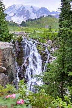 Mt. Rainier National Park - I'd live there if it didn't get so darned cold in the winter!
