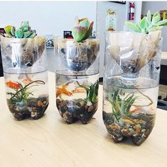 Want to try hands-on gardening in your classroom? Check out these classroom gardening ideas for great project-based learning and science experiments. Preschool Science, Science For Kids, Science Activities, Life Science, Ecosystem Activities, Science Experiments, Elementary Science, Science Ideas, Science Books