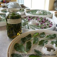 "Please Share This Page: If you are a first-time visitor, please be sure to like us on Facebook and receive our exciting and innovative tutorials on herbs and natural health topics! Image (with permission) – Commonsensehome.com Here's a great tutorial we found for those who are just getting into herbalism and looking for a ""way [...]"