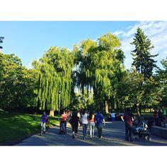 【valiumskies09】さんのInstagramをピンしています。 《Weeping Willow. #Toronto #TorontoLife #The6ix #6ix #TDot #Hometown #Views #ViewsFromThe6ix #CentreIsland #Island #WeepingWillow #Trees #Mystic #Nature #LakeOntario #Landscape #トロント #カナダ #湖 #海 #故郷 #青 #自然 #柳 #多伦多 #加拿大 #🇨🇦 #🌲#🌳#🌴》