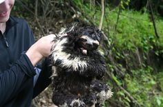Wild sloth in Amazon...no animal was harmed during the taking of this picture!