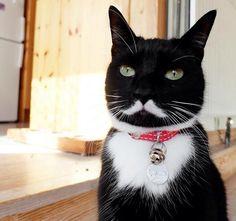 白い口ひげの模様をもつネコがカワイイと話題「伯爵みたい」 - Peachy - ライブドアニュース