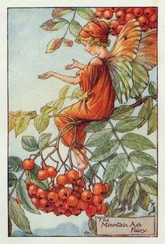 From Flower Fairies of the Autumn - love all the beautifully illustrated Flower Fairy books by Cicely Mary Barker, first published in the 1920s