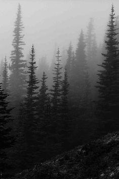 Misty forest in the Olympic Mountains, Washington by Trevor Ducken. Pine Forest, Dark Forest, Misty Forest, Conifer Forest, Evergreen Forest, Forest Mountain, Fantasy Forest, Forest Hill, Olympic Mountains