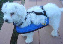 Critter's Inflatable Pet Life Jacket (Size Medium)