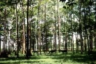 FAO -News Article:Productive and #healthyforests are crucial for meeting sustainable development, #climate, #land and #biodiversitygoals http://rplg.co/40ecacb0