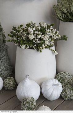 Herbstdeko – Beautiful decoration with the autumn vegetable pumpkin! Moon Garden, Dream Garden, Winter Flowers, Silk Flowers, Container Plants, Container Gardening, Fall Containers, Garden Windows, White Gardens