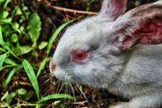 Rabbit by Vencislav Stanchev on 500px