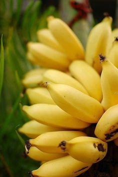 New fruit photography banana veggies 53 Ideas Colorful Fruit, New Fruit, Tropical Fruits, Fruit Art, Fruit And Veg, Fruits And Vegetables, Fresh Fruit, Banana Plants, Fruit Plants