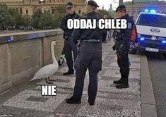 Funny Lyrics, Polish Memes, Bad Memes, Good Humor, Fnaf, Poland, I Laughed, I Am Awesome, Lol