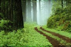 The Perfect Blend of Outdoor Scents When you stroll through the woods, you're met with fresh and invigorating fragrances that blend together in a natural symphony of scents. The Forest soy candle brin Kiko Zambianchi, Rome, Redwood Forest, Forest Path, Misty Forest, John Muir, Plein Air, Pathways, Belle Photo