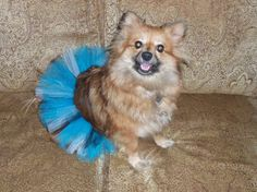 Tutu's for you puppy dog pooch pet pet costume by TreasuresByTan