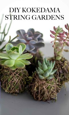Transform ordinary houseplants into adorable self-contained arrangements called Kokedama. These versatile arrangements can be suspended, displayed in a dish, or used in terrariums! String Garden, Cacti And Succulents, Planting Succulents, Planting Flowers, Air Plants, Indoor Plants, Organic Gardening, Gardening Tips, Gardening Quotes