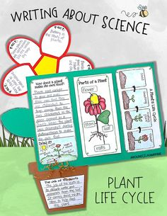 Are you looking for ideas and fun ways to get your first, second, or third graders writing about science? This post has lots of hands-on plant lessons and science experiments with writing activities to teach the life cycle of plants. The plant lapbook makes an ideal addition to your plant unit for 1st, 2nd, and 3rd grade. We displayed ours at open house and parents were so impressed! There are free posters for parts of a plant and photosynthesis in this post, too!