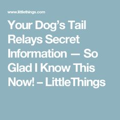 Your Dog's Tail Relays Secret Information — So Glad I Know This Now! – LittleThings
