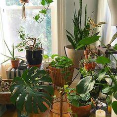Beautiful #plantcorner by @mamakeavintage. Love the diversity of form & foliage!