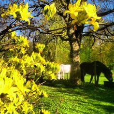 My garden / Ann-Sofi