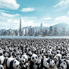 Pandas are taking over Hong Kong! An exhibit of 1,600 papier-mâché bears designed by French artist Paulo Grangeon.