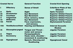 Mnemonics for Cranial Nerves Cranial Nerves List, Cranial Nerves Function, Speech Language Pathology, Speech And Language, Nursing School Tips, Ob Nursing, Nursing Schools, Physician Assistant School, Pharmacology Nursing