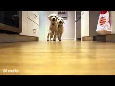 Per 9 Mesi Ha Filmato I Suoi Cani Che Corrono A Cena. Il Video E' Spettacolare