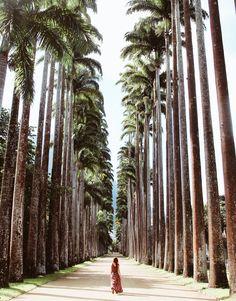 10 tips for seeing Rio de Janeiro like a local           Jardim Botânico