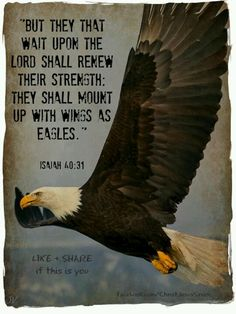 Eagles On Pinterest Wings Bald Eagle And Youth