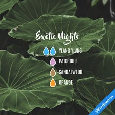 Exotic Nights — Essential Oil Diffuser Blend