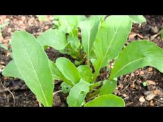 ▶ Growing More in the Space You Have - YouTube