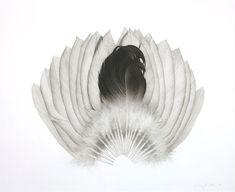 Jonathan Delafield Cook ~ Fan tail II ~ 2006 charcoal on paper