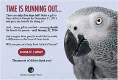 Donate today! http://www.parrots.org/africa/