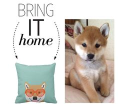 """Bring It Home: Shiba Inu Sunglasses Pillow"" by polyvore-editorial ❤ liked on Polyvore featuring interior, interiors, interior design, home, home decor, interior decorating and bringithome"